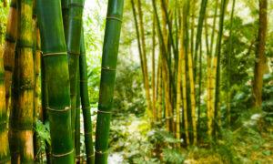 viscose de bambu para colchoes